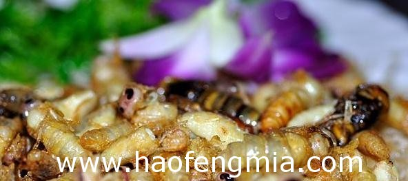 胡蜂蛹怎么吃?