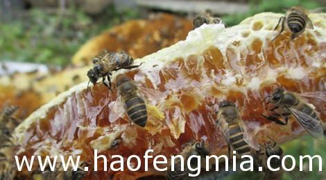大凉山的生态蜂蜜:阿米子