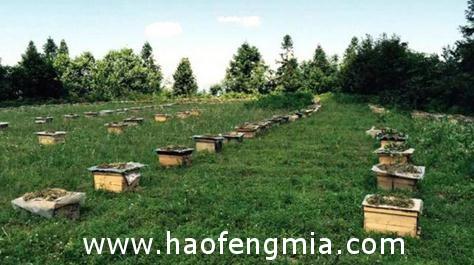 锯齿山蜂蜜通过SGS全面检测