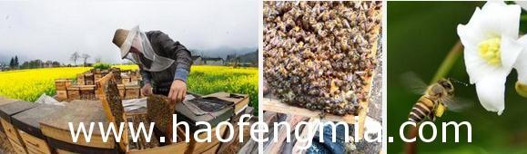 双王群养蜂方法和注意事项