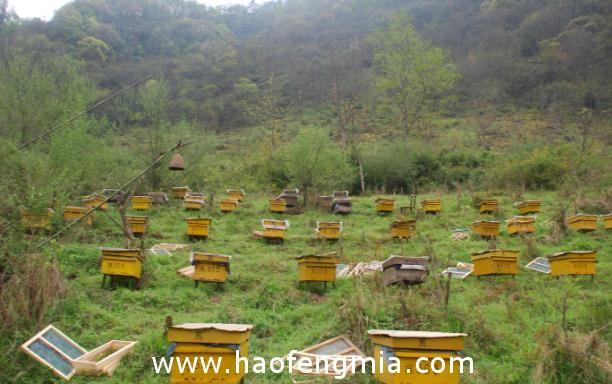 蜂蜜种类多蜂蜜的作用与功效有差异