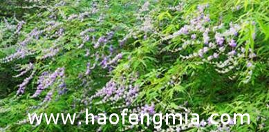 种植蜜源植物定地养蜂模式介绍