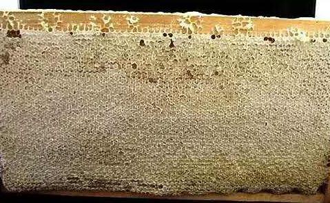 什么是成熟蜜?成熟蜂蜜知识介绍