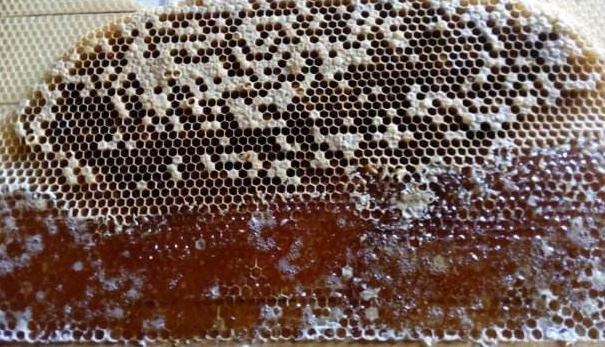 蜂蜜有什么营养价值