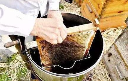 蜂箱边现摇的蜂蜜能掺假吗