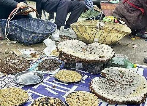 贵州职业追蜂人卖野蜂蛹热年入数万元
