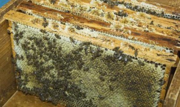 为什么多数蜂场只生产水蜜,喂糖蜜,而不生产纯天然成熟封盖蜜?