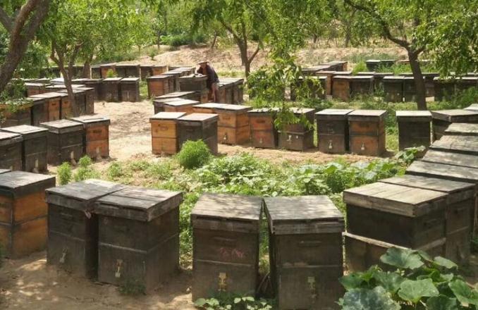 蜂蜜什么时候取蜜最佳