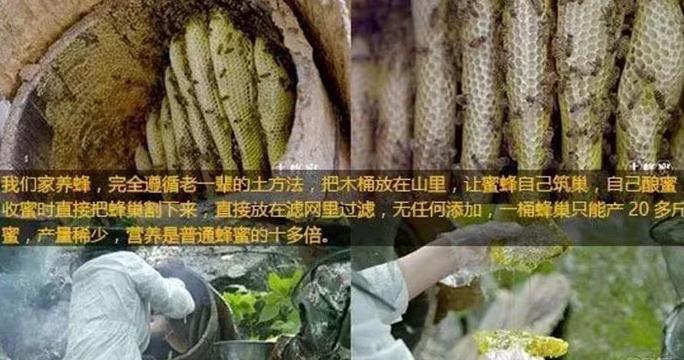 网红杨霞火谎言被揭穿   卖的土蜂蜜是真的还是假的