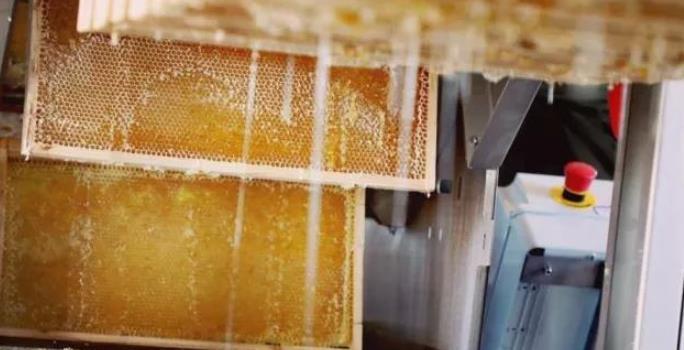 好蜂蜜之沙棘藏蜜 沙棘藏蜜怎么样