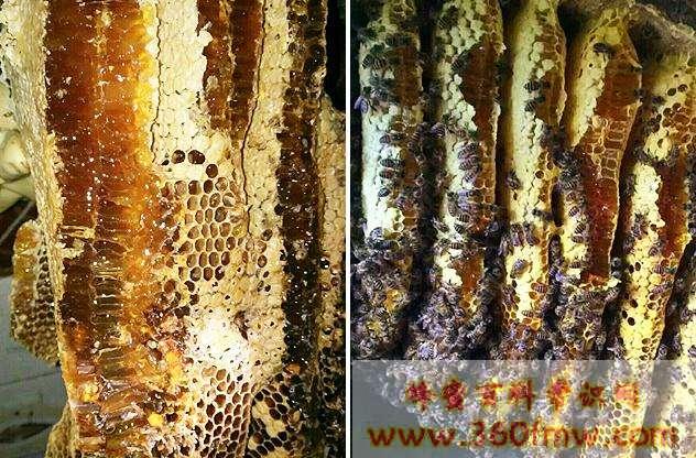 山楂蜂蜜好吗?好蜂蜜之山楂蜂蜜的作用与功效介绍