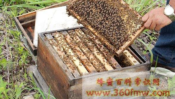 蜂巢箱与继箱颠倒使用可以让蜂蜜增产吗?