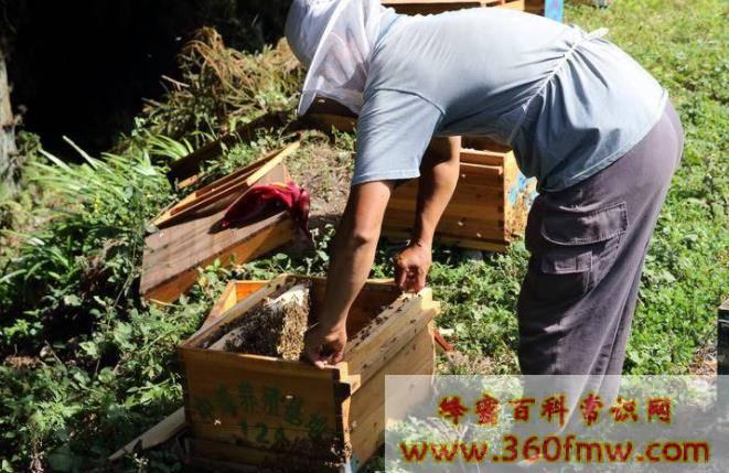 初次养蜂要点_初次养蜂需要了解哪些养蜂要点?