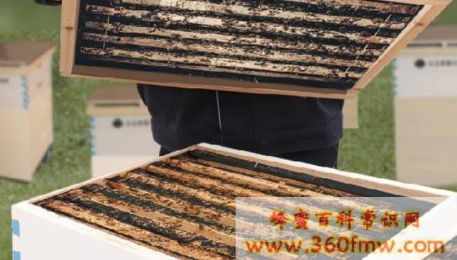 蜜蜂黑蜂病怎么治疗_蜜蜂黑蜂病是怎样发生的