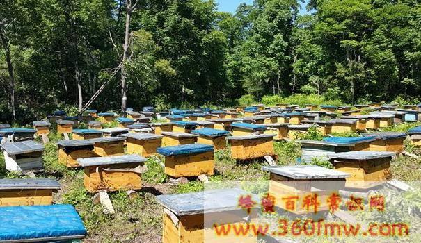 蚂蚁和蜜蜂的关系_如何防治蚂蚁对蜜蜂的危害