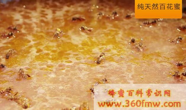 真正土蜂蜜_真正的土蜂蜜是怎么样的