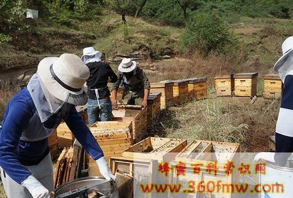 美国养蜂_美国养蜂业介绍