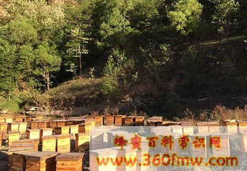 青海养蜂_青海养蜂业之饲养技术推广