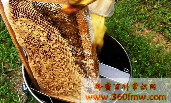 新疆养蜂_新疆养蜂业之养蜂饲养技术的改进与推广