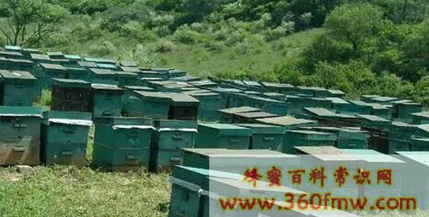 中国主要蜜源植物及分布介绍_中国主要蜜源植物分布