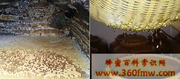 蜂蜜为什么是碱性食品_蜂蜜是碱性食品吗