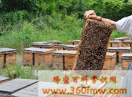 春季蜂群管理要点 蜂群的春季管理