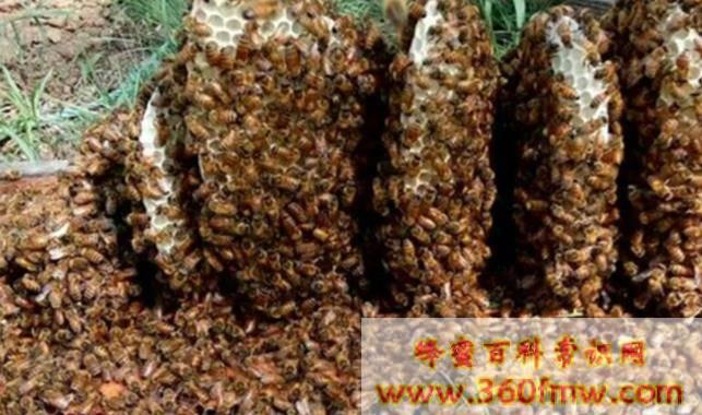 江苏省市场监管局举办蜂产品生产企业电子追溯系统建设网络直播培训