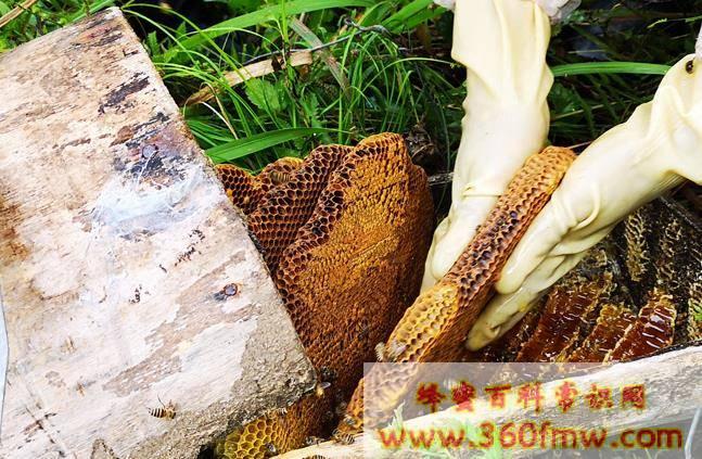 蜂蜜为什么可以保存很久都不会变质