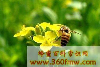 蜂毒过敏反应的因素