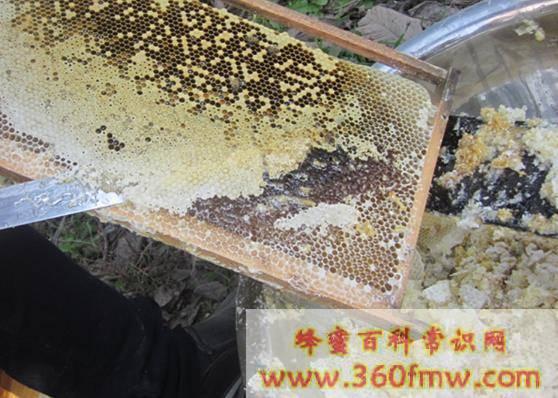 蜂蜜的发展历史  蜜蜂历史文化