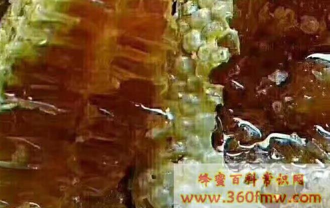 桉树蜜的作用与功效有哪些?桉树蜂蜜的作用与功效详解