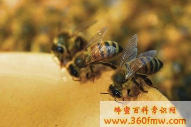 冬季蜂群的管理