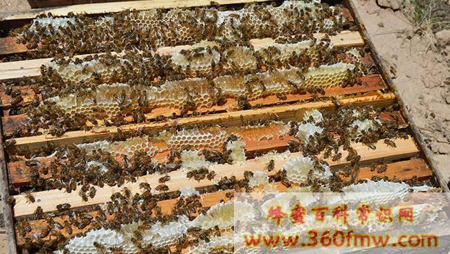 蜂蜜的保存方法及保存时间