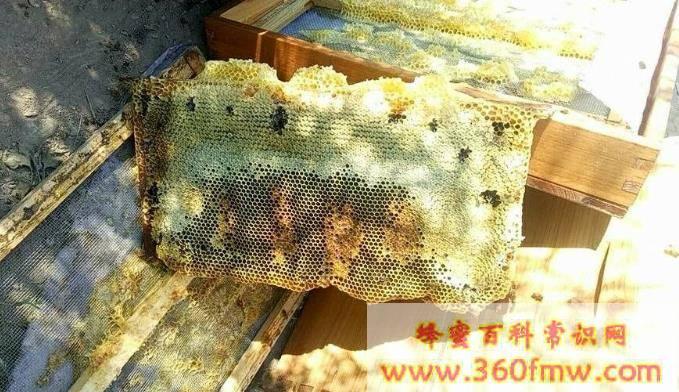 蜂蜜变质是什么样子