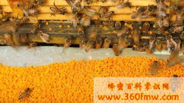 花粉作用与功效