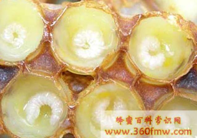 蜂王浆对身体的益处
