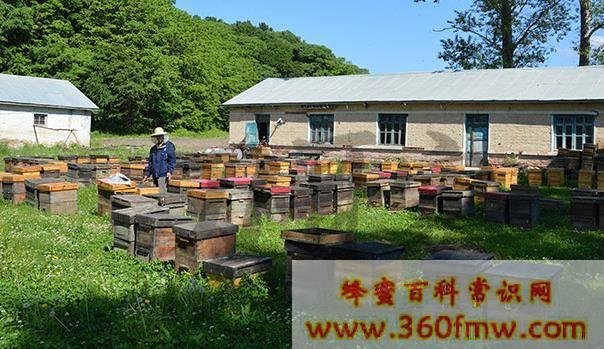 怎么给蜜蜂喂白糖水 蜜蜂喂白糖的方法