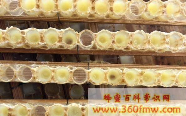 蜂王浆的美容功效与作用