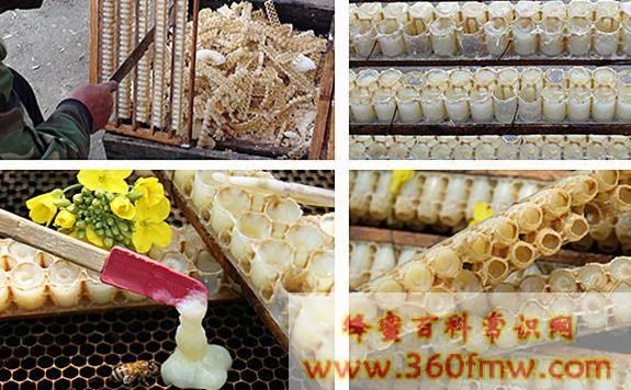 蜂王浆的吃法食用方法
