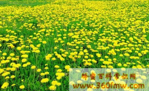 黑龙江省粉源植物有那些?黑龙江省主要粉源植物介绍