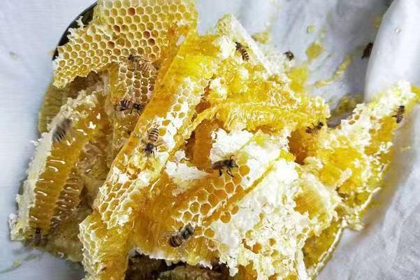彭水蜂蜜喜获丰收  蜂农增收上万元