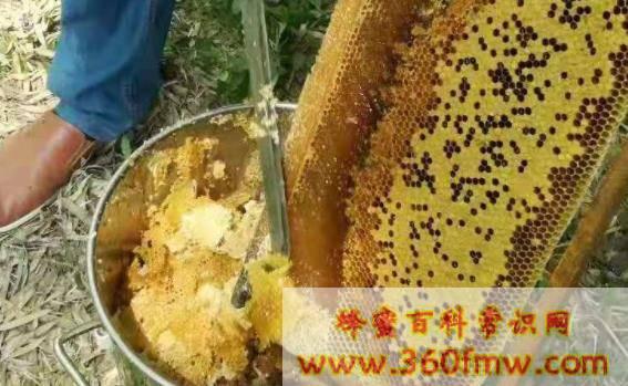 蜂蜡的国家标准_蜂蜡的质量标准