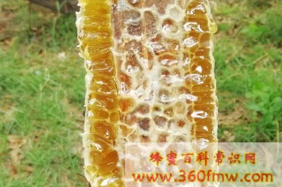 荔枝蜜的功效与作用