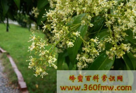 浙江省主要蜜粉源植物资源、花期与分布情况
