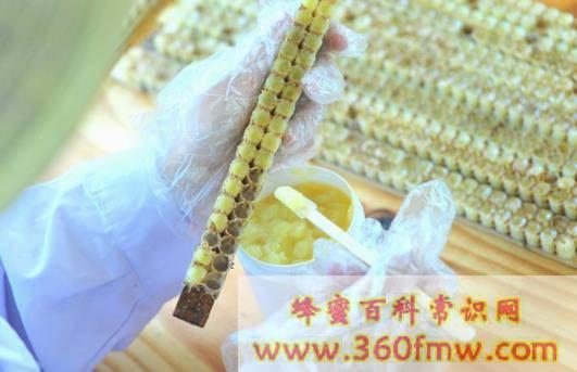 蜂王浆的安全性 新鲜蜂王浆副作用