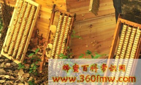 蜂王浆的服用量是多少 蜂王浆的日常口服用量