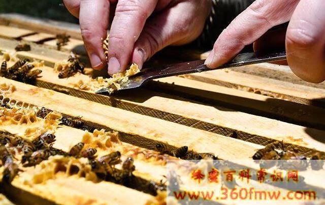 蜂胶的美容作用与功效 蜂胶有美白功效么