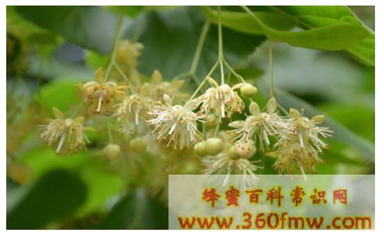 中国辅助蜜源植物