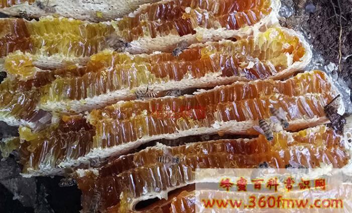 野蜂蜜的功效与作用