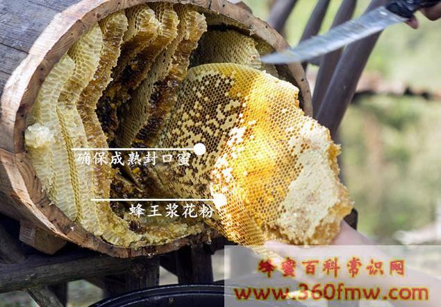 洋蜂蜜和土蜜蜂哪个好